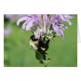 Bumble Bee On Bee Balm Flower Photography Card