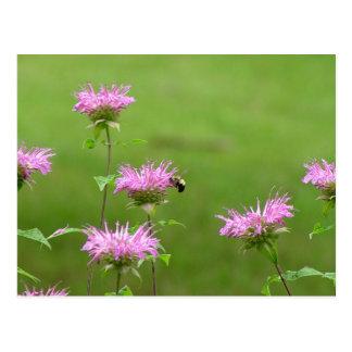 Bumble Bee on Bee Balm Flower Postcard