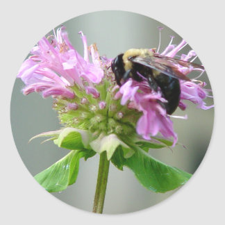 Bumble Bee on Bee Balm Flower Sticker