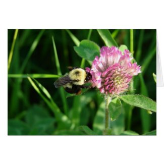 Bumble Bee on Clover card