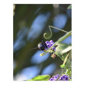 BUMBLE BEE ON FLOWER RURAL QUEENSLAND AUSTRALIA POSTCARD