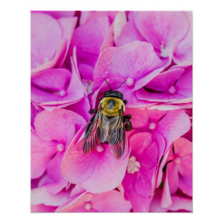 Bumble Bee On Hydrangea Poster