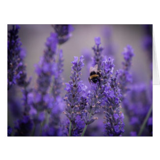 Bumble Bee on Lavender Card