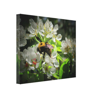 Bumble Bee on my pear tree Canvas Print