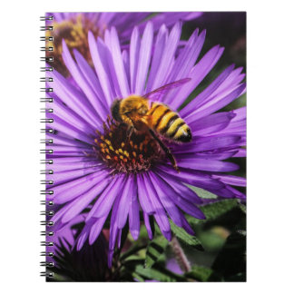 Bumble Bee on Purple Aster Flower Notebooks