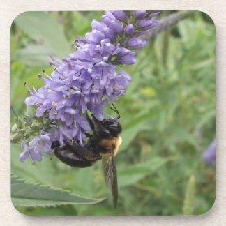 Bumble Bee on Purple Flower Coasters