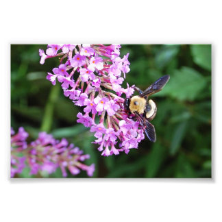 Bumble Bee on Purple Flower Print Photo