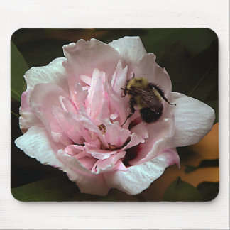 Bumble Bee on Rose of Sharron Flower Mouse Pad
