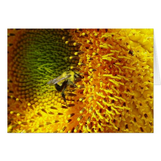 Bumble Bee on Sunflower Card
