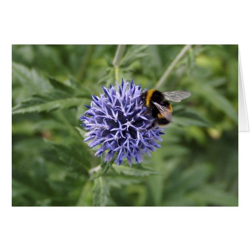 Bumble Bee on Thistle Greeting Card