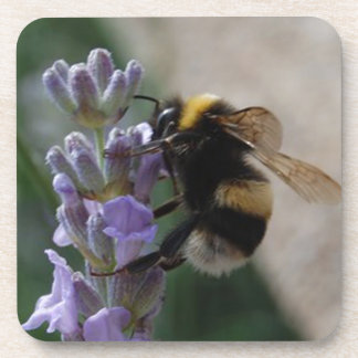 Bumble Bee On Valender Beverage Coasters