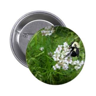 Bumble Bee on White Flowers Buttons