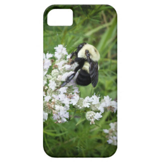 Bumble Bee on White Flowers iPhone 5 Case