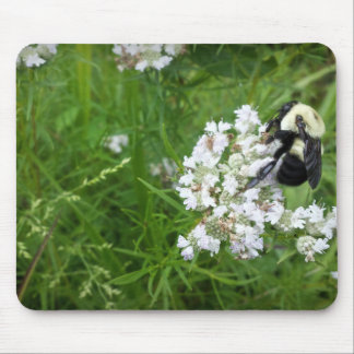 Bumble Bee on White Flowers Mouse Pad