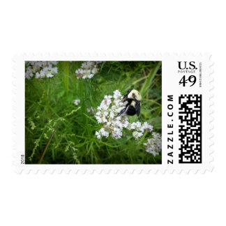 Bumble Bee on White Flowers Stamp