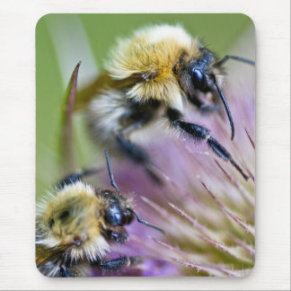 Bumble Bee On Wild Flower Mouse Pad