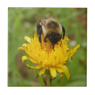 Bumble Bee On Yellow Dandelion Ceramic Tile