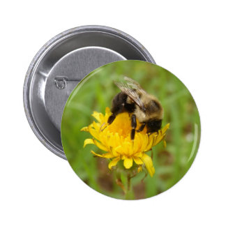 Bumble Bee on Yellow Dandilion Buttons
