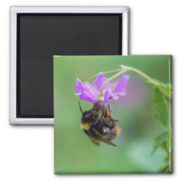 Bumble Bee Photo Magnet