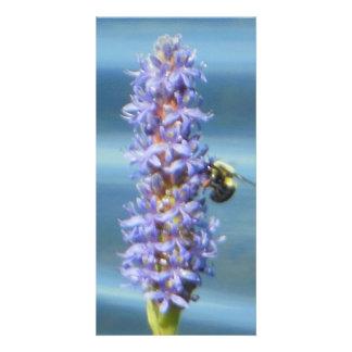 Bumble Bee Pickerelweed Card