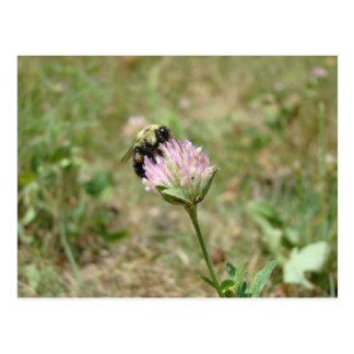 Bumble Bee Postcard