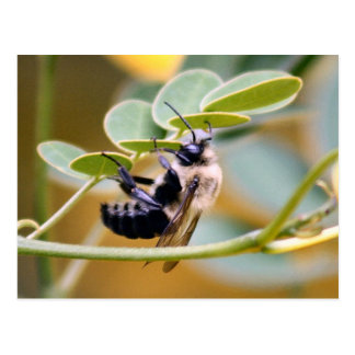 Bumble Bee Postcard
