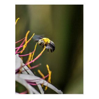 BUMBLE BEE QUEENSLAND AUSTRALIA POSTCARD