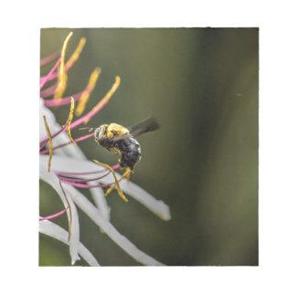 BUMBLE BEE RURAL QUEENSLAND AUSTRALIA NOTEPAD