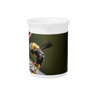 BUMBLE BEE RURAL QUEENSLAND AUSTRALIA PITCHERS