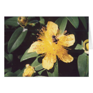 Bumble Bee & St. John's Wort Card