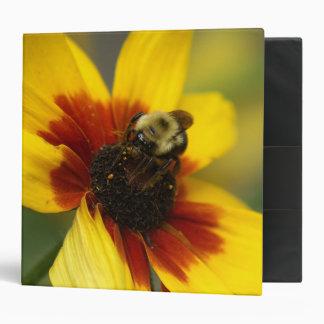 Bumble Bee, Three Ring Binder. 3 Ring Binder