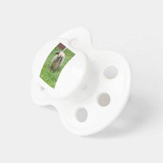 Bumble Rabbit Pacifier