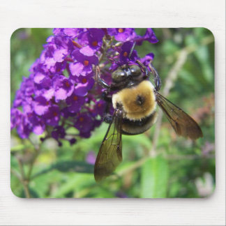 BumbleBee01 Mouse Pad