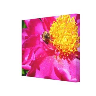 Bumblebee and Peony wrappedcanvas