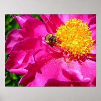 Bumblebee and Peony print