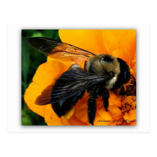 bumblebee and pollen postcard