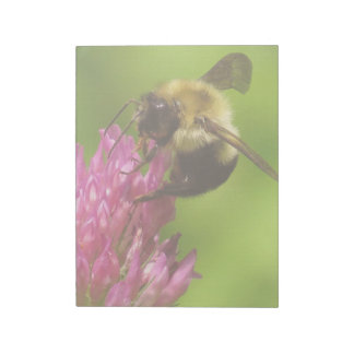 Bumblebee Bee Wildlife Animals Floral Clover Notepad
