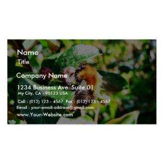 Bumblebee Business Card