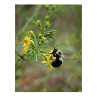 Bumblebee & False Foxglove Postcards