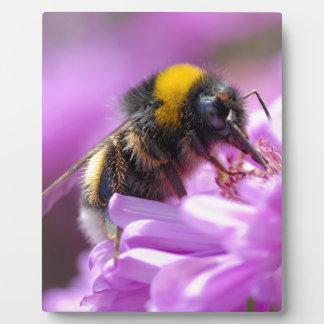 Bumblebee feeding on flower plaque