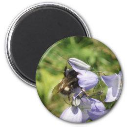 Bumblebee flower photo magnet