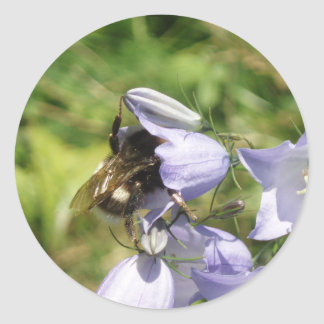 Bumblebee flower photo sticker