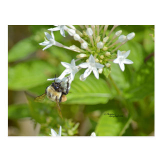 Bumblebee & flowers postcard