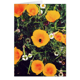Bumblebee in the Poppies notecards Card