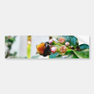 Bumblebee Insect Bumper Stickers