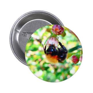 Bumblebee Macro Pinback Buttons