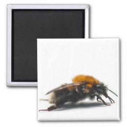 Bumblebee Magnet