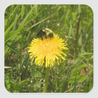Bumblebee on a Dandelion Square Sticker