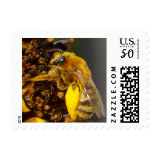 Bumblebee on a Sunflower Postage Stamps