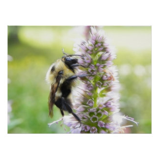 Bumblebee On Agastache Flower Poster